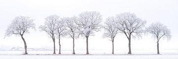 Winterlandschap met berijpte bomen van Jenco van Zalk