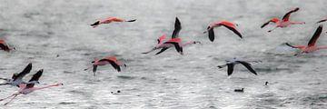 Flamingo's 2  van Marloes van der Beek-Rietveld