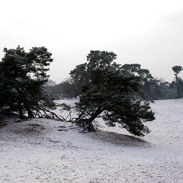 Drunense Dünen mit Schnee von Edith Wijte