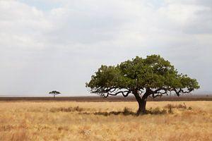 Serengeti van