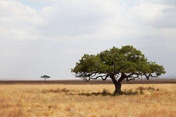 Serengeti von Anne-Marie Vermaat