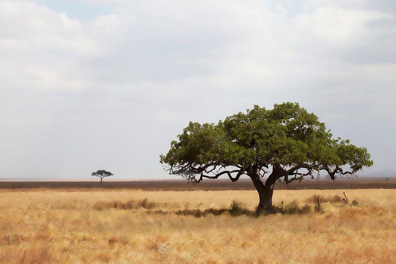 Serengeti van Anne-Marie Vermaat