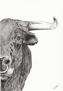 Stier (Stier) von Carmen-Ghizela Todita