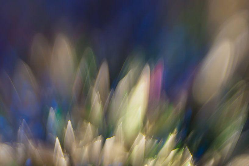 Kleur Explosie #2 van Robert Wiggers
