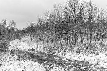 Schneelandschaft von Stefaan Tanghe