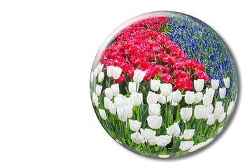 Rote und weiße Tulpen und Traubenhyazinthen in ein Glaskugel in Keukenhof Holland sur Ben Schonewille