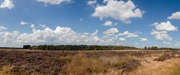 Bosje van Staf. Wald. von Marcel Pietersen