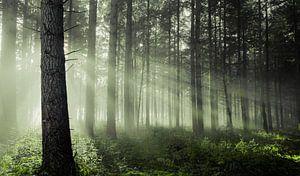 Sfeervol bos van