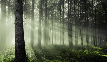 Forest moods sur Rob Visser