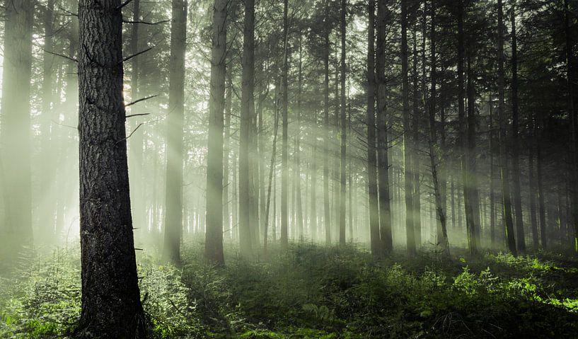 Sfeervol bos van Rob Visser