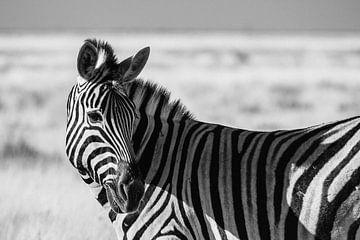 Steppezebra / Zebra in zwart-wit - Etosha, Namibië van Martijn Smeets