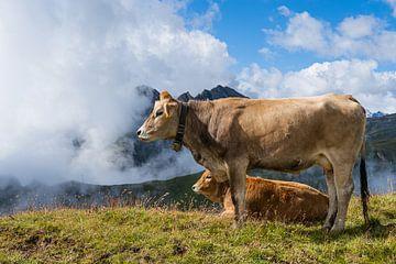 Vache de montagne sur Greenfield Visuals