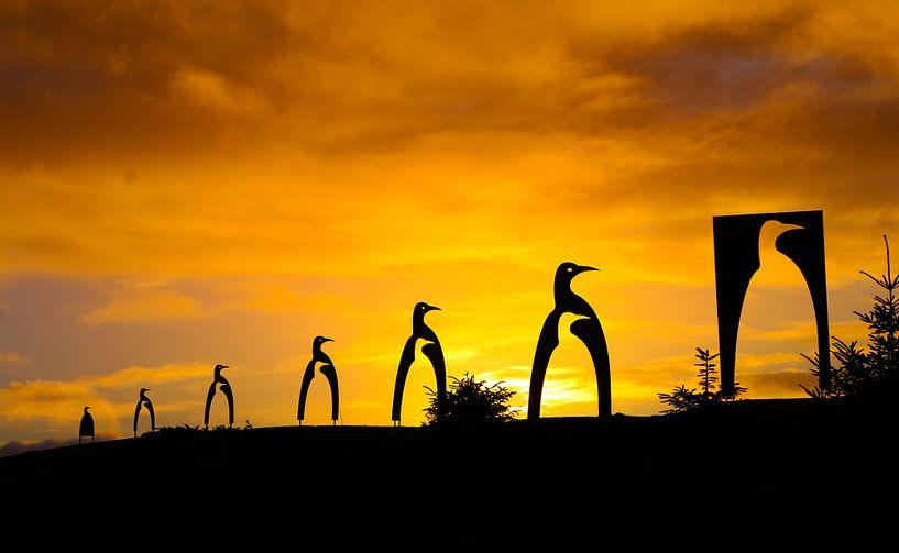 Pinguïn Glesvaer van Ronald Molegraaf