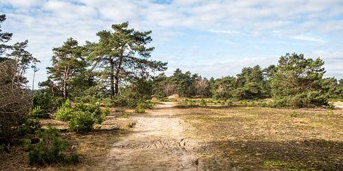 Een zandpad langs naaldbomen en graslandschap op de Hoge Veluwe