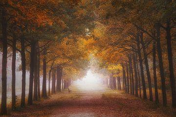 Herfst bos in de mist van Saskia Dingemans