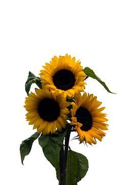 three sunflowers van Compuinfoto .
