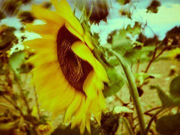 Sonnenblumen im Wind 4 van