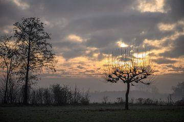 boom in brand van Tania Perneel
