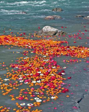 Bloemen in de rivier de Ganges in India van Nisangha Masselink