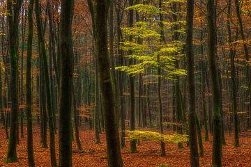 Het bos van Jan Linskens