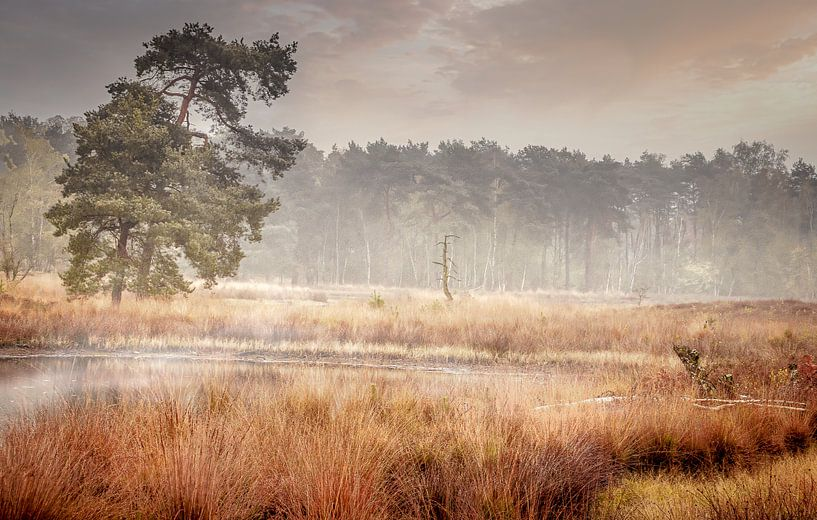 Mistige ochtend op de Beegderheide van Peschen Photography