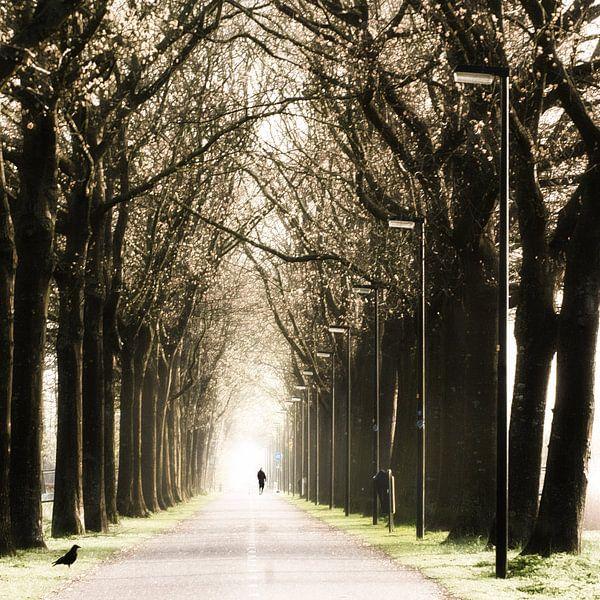 walking to the light van bob van den berg
