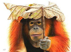 Orang Oetang van