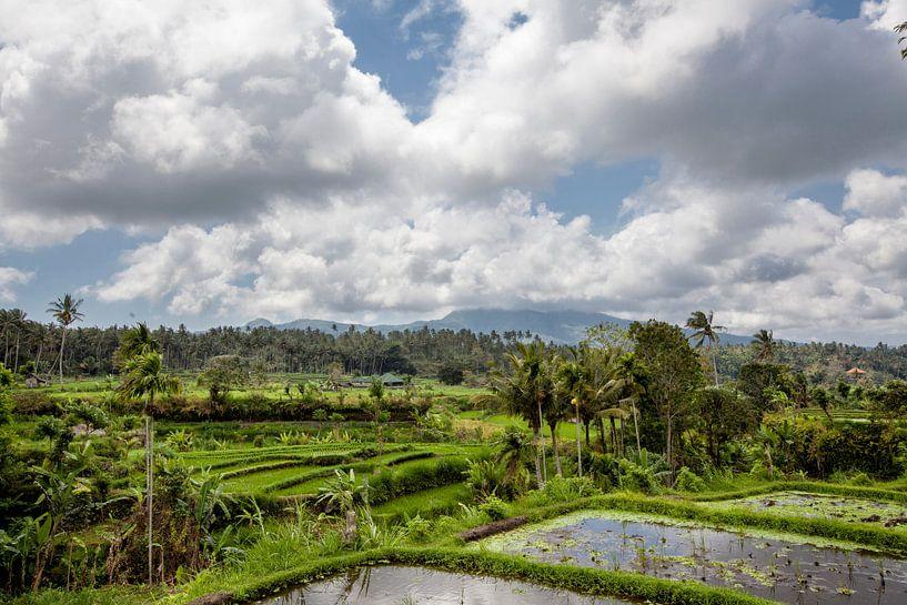 Prachtige groene terras rijstvelden op Bali, Indonesië van Tjeerd Kruse