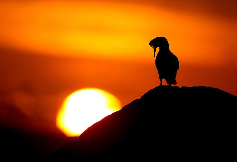 Papageientaucher von AGAMI Photo Agency