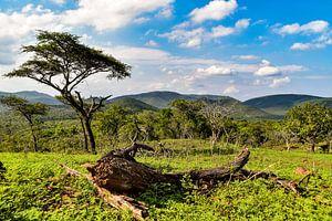 Afrika natuur van Hermineke Pijls