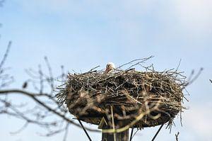 Een ooievaar op zijn nest