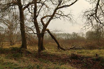 Wild gevormde bomen van Pim van der Horst