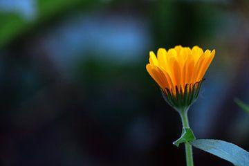 Die orangefarbene Blume von Merel Visser