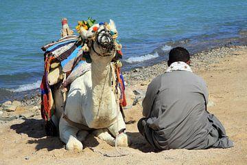 Man met de kameel van Jolanta Mayerberg