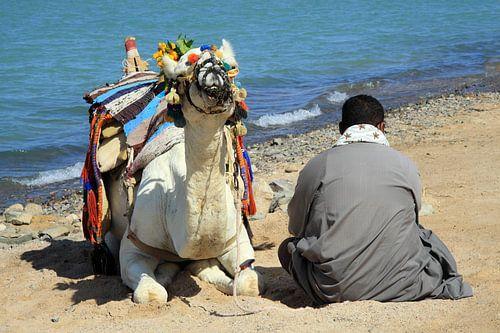 Man met de kameel