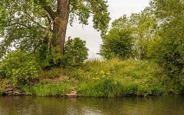 Végétation sauvage au bord de l'eau dans une réserve naturelle sur Ruud Morijn