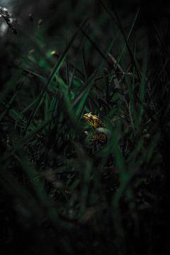 Kikker bij maanlicht van Roel Verver