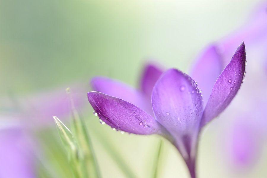 Deep purple van Gonnie van de Schans