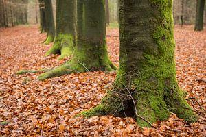 Groene boomvoeten op een bladertapijt