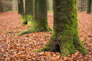 Green, moss-covered, tree feet von Tonko Oosterink