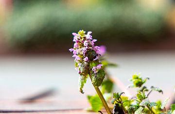 Frühlingsblüher von W.Schriebl PixelArts