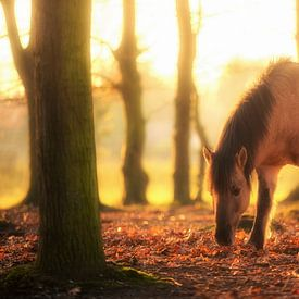 Foraging Horse van Cho Tang