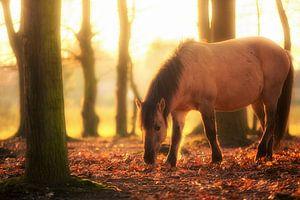 Foraging Horse