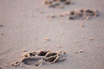 Pootafdrukken in het zand