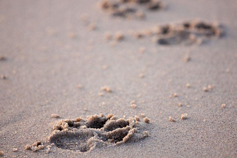 Pootafdrukken in het zand van Ramon Bovenlander