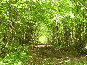 Waldweg von Ramon Labusch