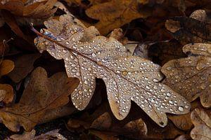 Eikenblad met regendruppels
