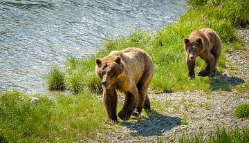 Grizzly beer met jong lopend langs de rivier, Alaska van Rietje Bulthuis