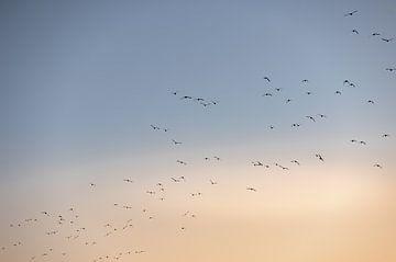 Vögel fliegen über Walcheren von Percy's fotografie