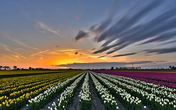 Zonsondergang boven tulpenveld van Ans Bastiaanssen